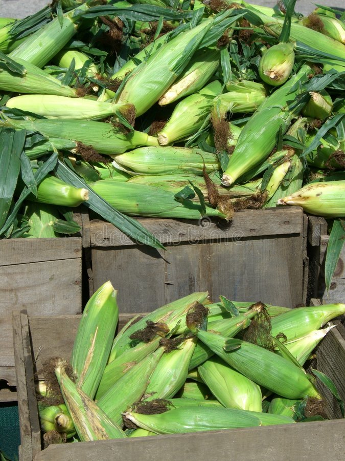 Download Corn for Sale stock photo. Image of cornsilk, crates, vegetable - 1072324