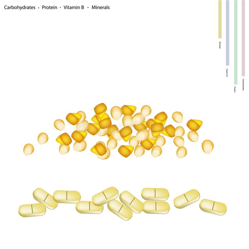 Corn Seed with Vitamin B and Minerals. Healthcare Concept, Illustration of Corns Seed with Carbohydrates, Protein, Vitamin B and Minerals Tablet, Essential royalty free illustration
