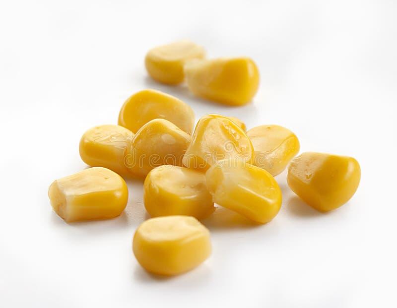 Corn seeds royalty free stock image