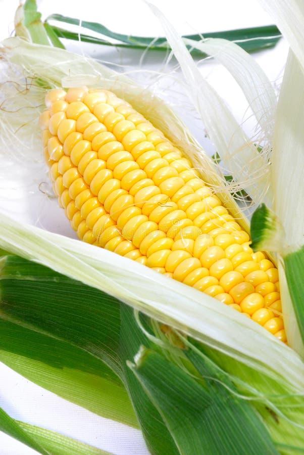 Free Corn Series 01 Royalty Free Stock Image - 10514096