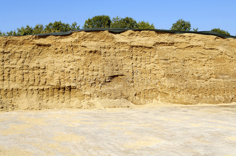 Corn silage royalty free stock images