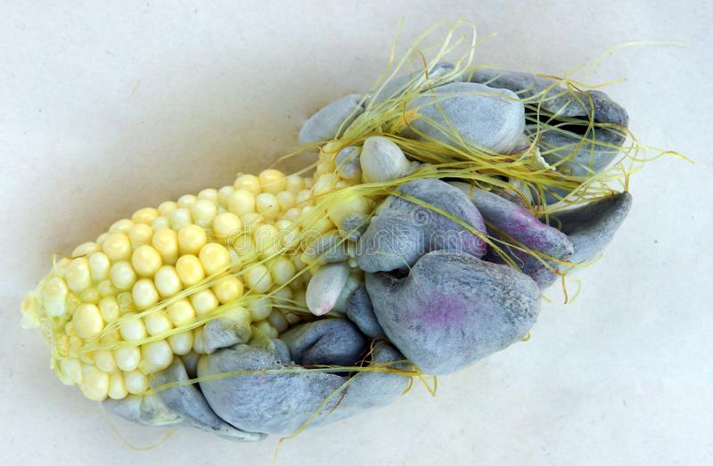 Corn smut caused by fungus Ustilago maydis stock photos