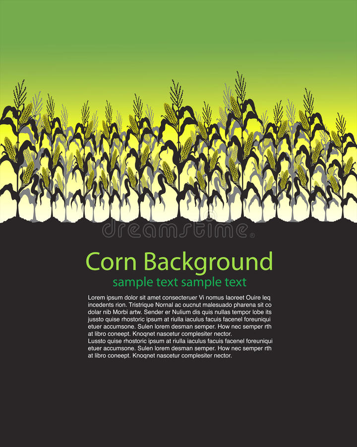 Download Corn Stalks Field stock vector. Image of barley, farmland - 27078800