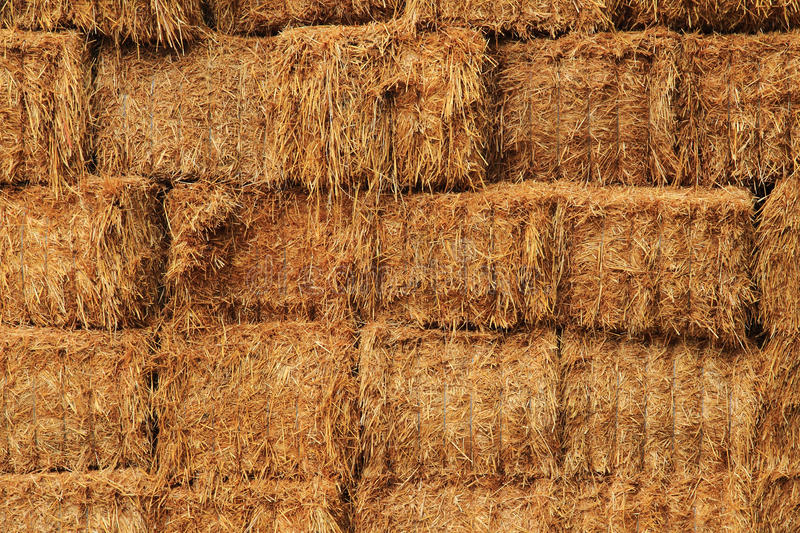 Corn straw cubes stock photo image of outdoor gold 61362590 download corn straw cubes stock photo image of outdoor gold 61362590 sciox Choice Image