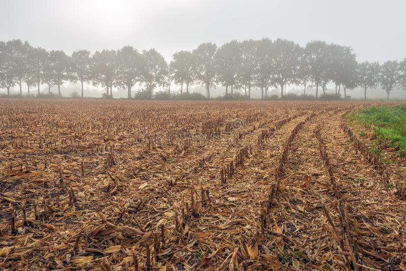 Corn stubble field on a misty morning in the fall season stock photos