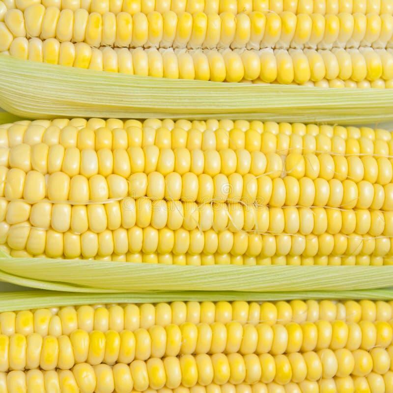 Download Corn texture stock image. Image of grain, food, background - 26292177