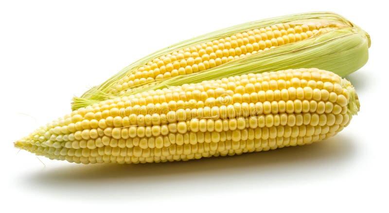 Corn royalty free stock photography