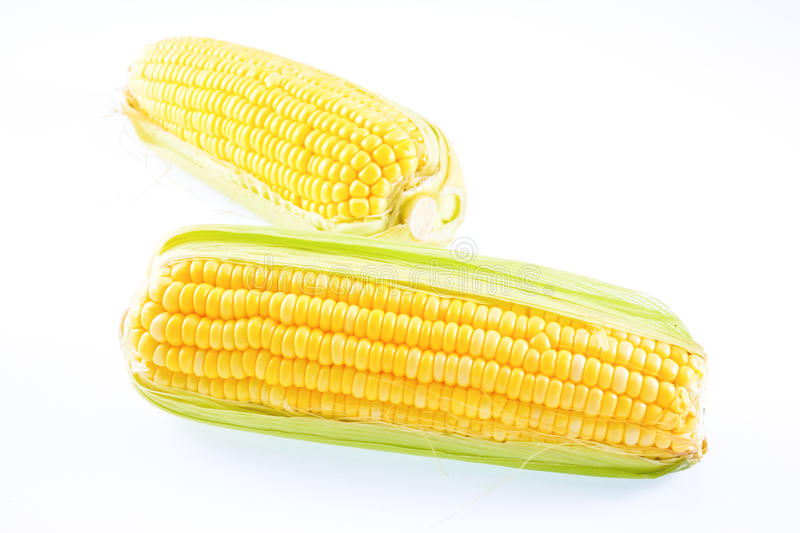 Corn on a white background. Maize (/ˈmeɪz/ MAYZ; Zea mays subsp. mays, from Spanish: maíz after Taíno mahiz), known in some English-speaking stock image