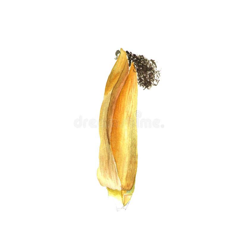 corncob Hand het getrokken waterverf schilderen op witte achtergrond, illustratie royalty-vrije illustratie