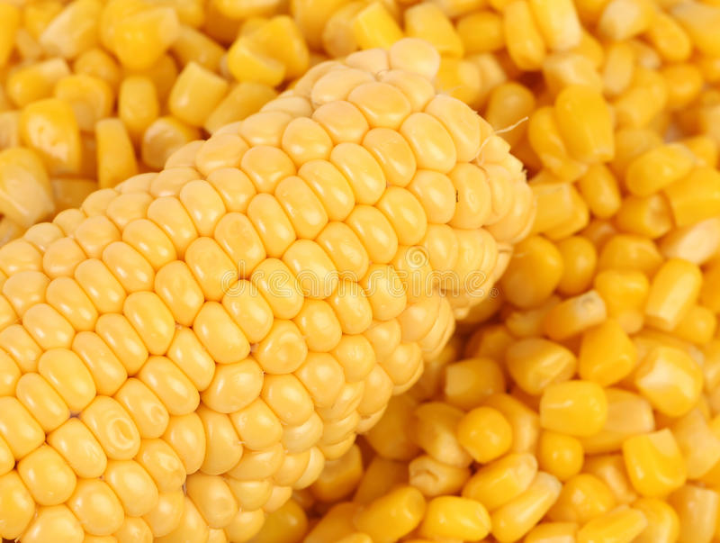 Corncobs and canned corns. stock photos