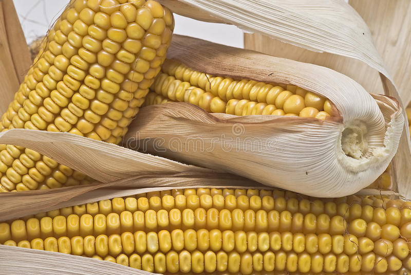 Download Corncobs I stock image. Image of cool, corn, feed, ingredient - 12473639