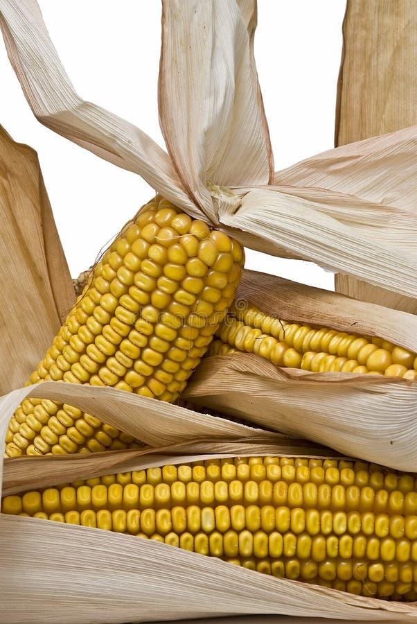 Download Corncobs II stock image. Image of livestock, corn, natural - 12473665