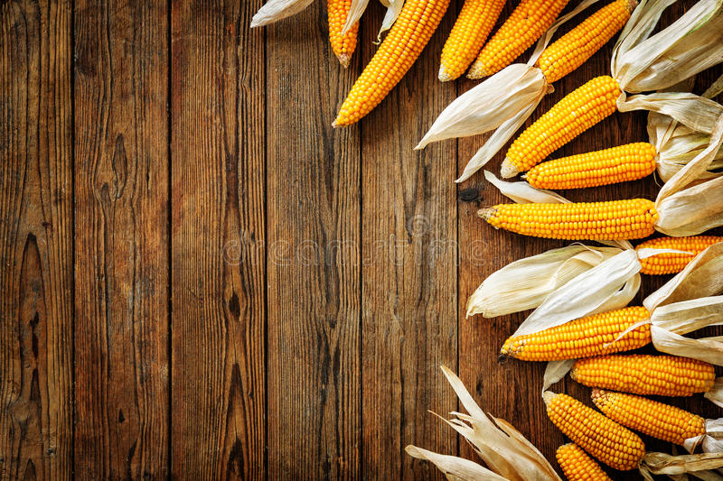 Corncobs on rustic wooden background royalty free stock photos