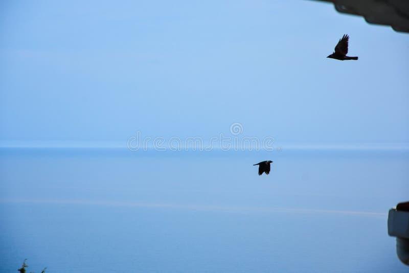 Corneille noire, fond de ciel bleu image stock