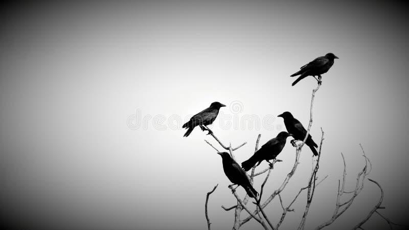 Corneilles dans l'arbre mort images stock