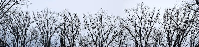 Corneilles sur des arbres photographie stock libre de droits