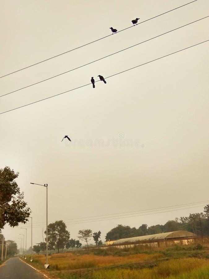 Corneilles sur le câble photographie stock libre de droits