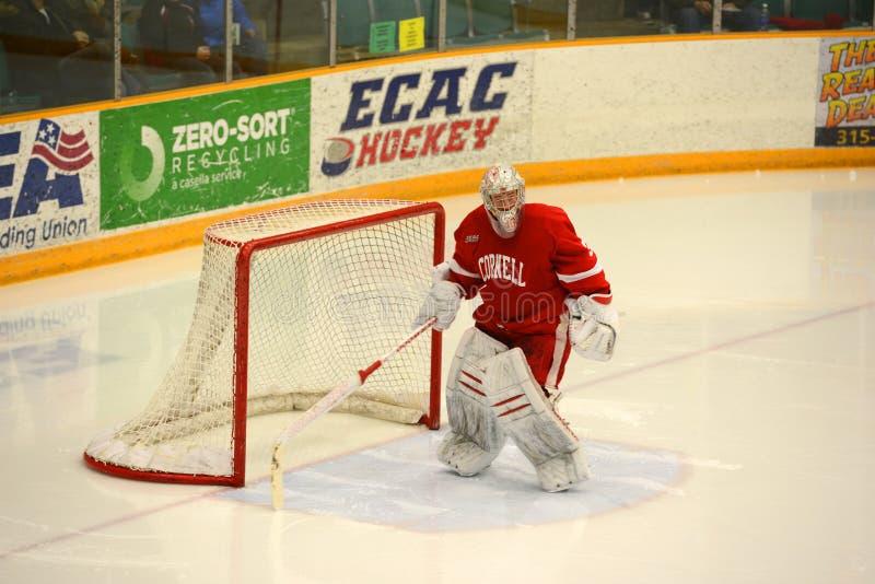 Cornell Goalie #33 i NCAA-hockeylek fotografering för bildbyråer