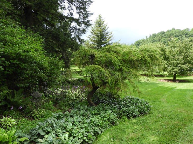 Cornell ogródu botanicznego strumienia odprowadzenia ślad zdjęcia royalty free