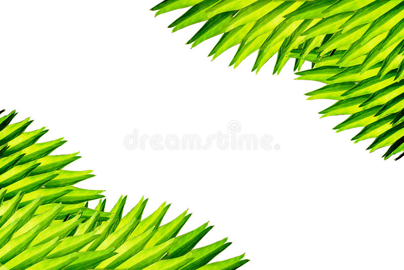 Corner made from palm leaves royalty free stock photography