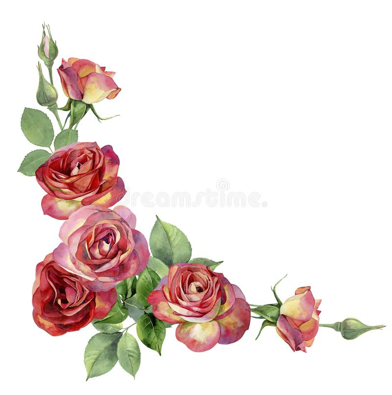 Corner of watercolor, red roses. On a white background. For greetings, invitations, weddings, birthday stock illustration