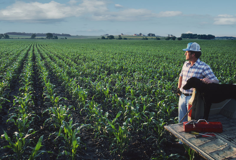 cornfield αγρότης σκυλιών στοκ εικόνες
