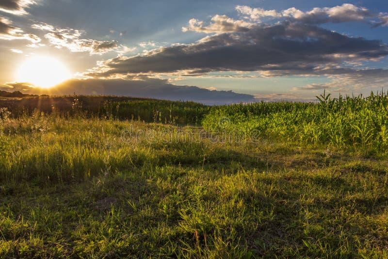 cornfield πέρα από το ηλιοβασίλεμα στοκ φωτογραφία