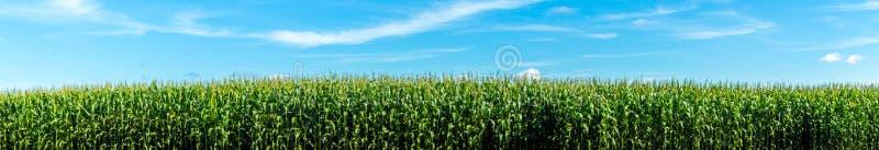 Cornfield aanplantingsinstallatie stock afbeeldingen