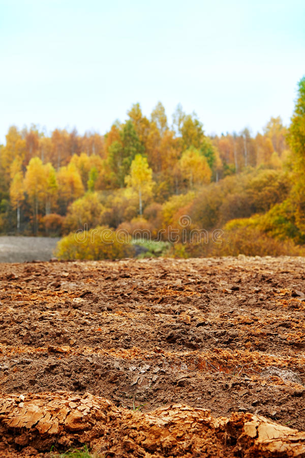 Cornfield in autumn royalty free stock images