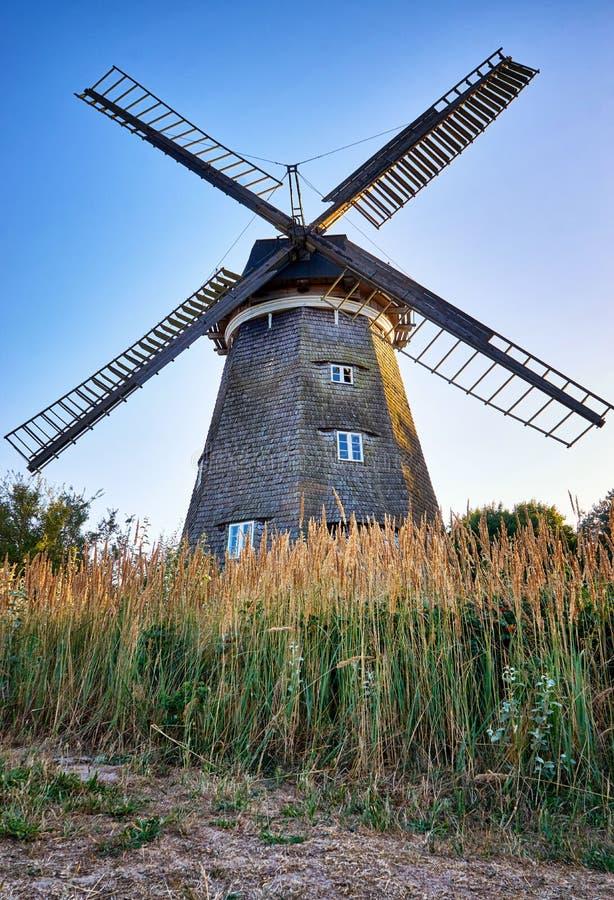 Cornfield con mulino a vento olandese, Benz sull'isola di Usedom Germania immagine stock libera da diritti