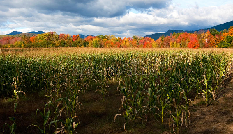 Cornfield on Farm Leads to Autumn Colors Against Mountains stock images