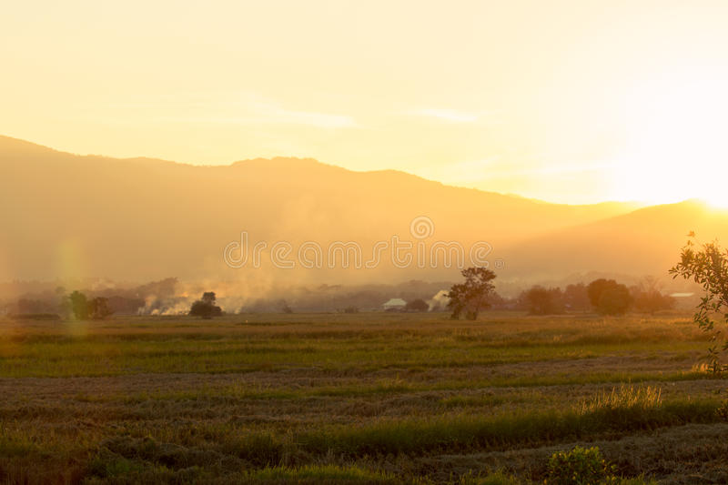 Cornfield with farmland at sunset. stock images
