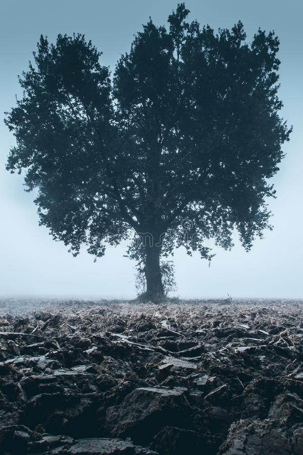 Lone tree in a field after the plowing moody style image. Lone tree in a field after the plowing - moody style image royalty free stock images