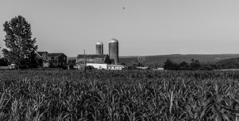 Cornfield met landbouwbedrijf op achtergrond in zwart-wit royalty-vrije stock afbeeldingen