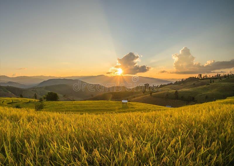 Cornfield met zonsondergang stock foto