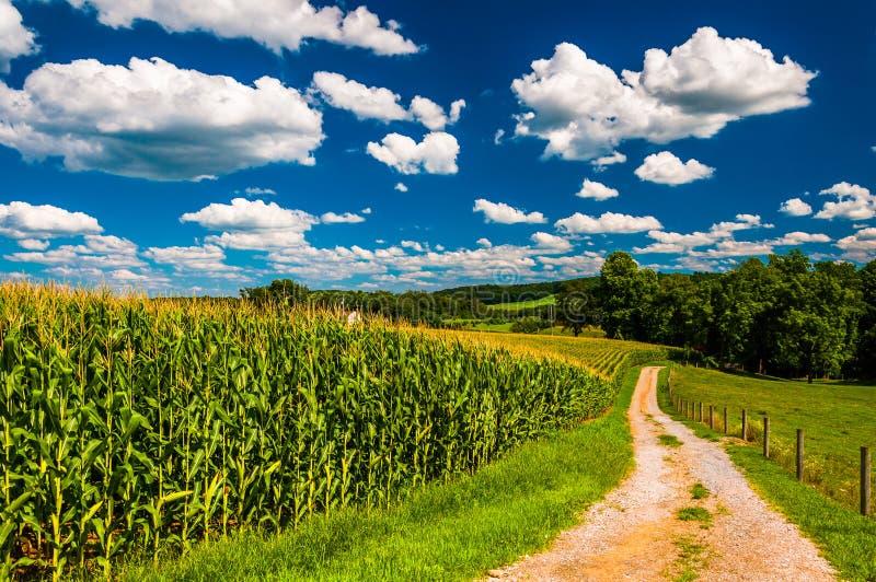 Cornfield och körbana till en lantgård i lantliga sydliga York County, royaltyfria foton