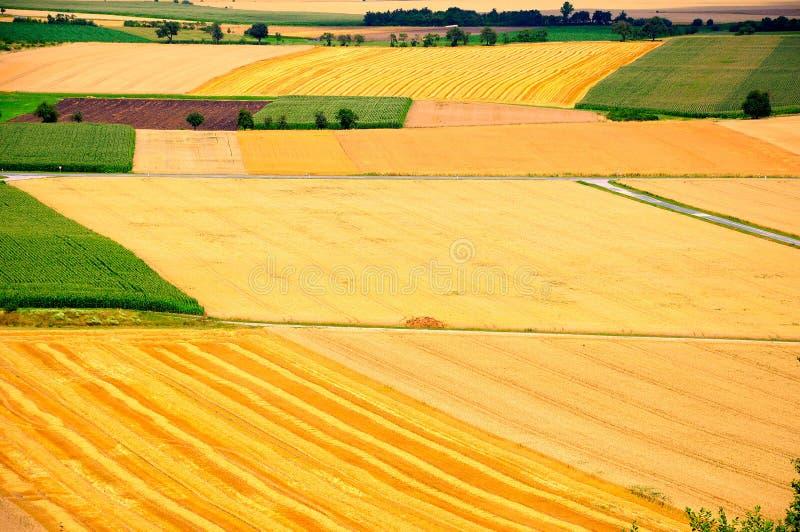 cornfields royaltyfria foton