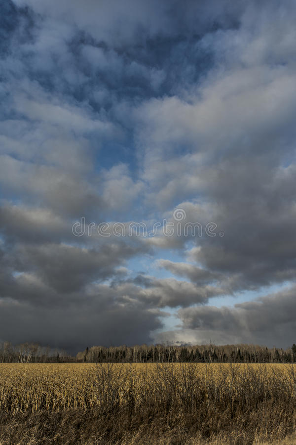 Cornfieldstorm royaltyfri foto