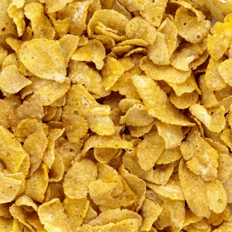 cornflakes zdjęcie royalty free