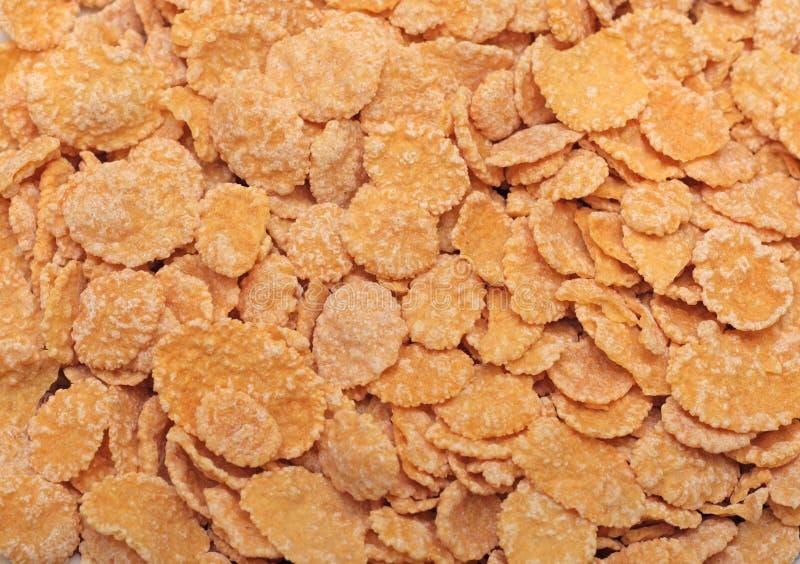 cornflakes стоковое фото