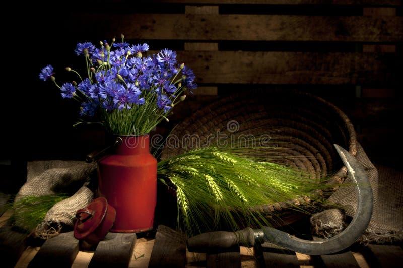 cornflower καλοκαίρι ζωής πεδίων &alph στοκ εικόνες