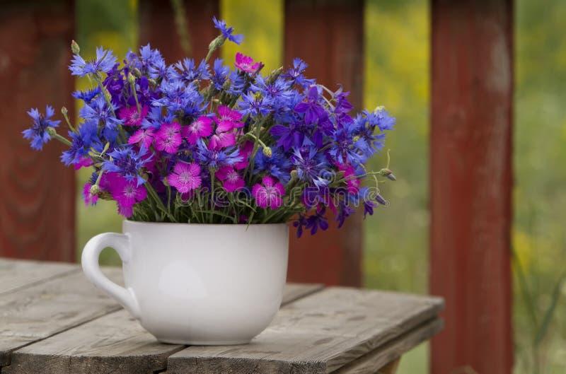 cornflower гвоздики цветет одичалое стоковое фото rf