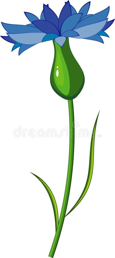 cornflower иллюстрация штока