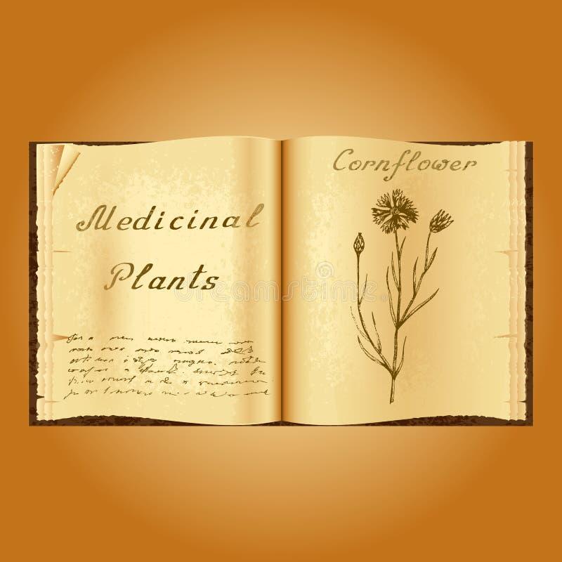 cornflower Botanische illustratie Medische installaties Het open boek van Old van het boekkruidkundige stock illustratie