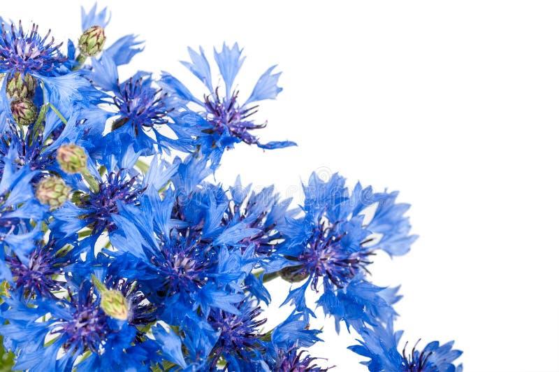 cornflower bouquet des fleurs bleues sauvages photo stock. Black Bedroom Furniture Sets. Home Design Ideas