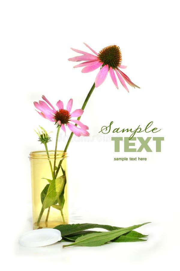 Cornflower del Echinacea in contenitore di prescrizione fotografia stock libera da diritti