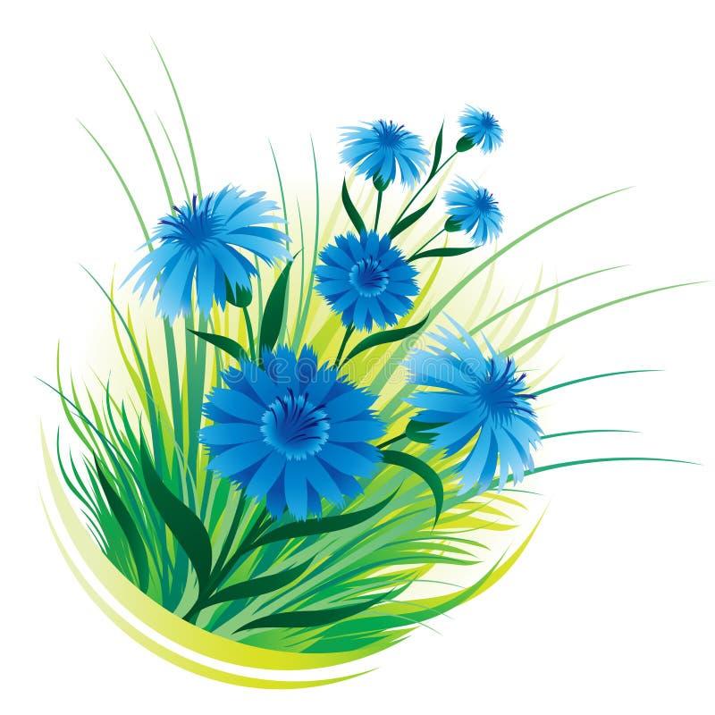 Cornflower e hierba stock de ilustración