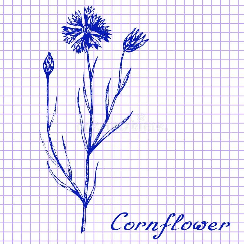 cornflower Het botanische trekken op oefenboekachtergrond stock illustratie