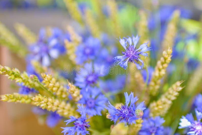 Cornflowers и пшеница стоковое фото
