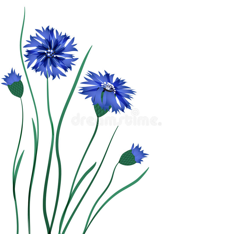 Download Cornflowers stock vector. Image of background, clipart - 15954362